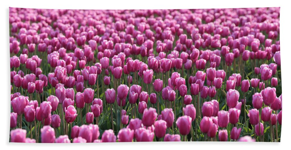 Tulips Beach Towel featuring the photograph As Far As The Eye Can See by Carol Groenen