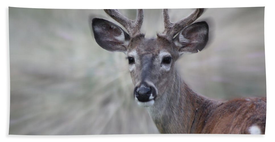 Deer Beach Towel featuring the photograph As Seasons Change by Janie Johnson