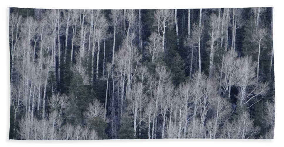 Aspen Trees Beach Towel featuring the photograph Aspen by Jamie Ramirez