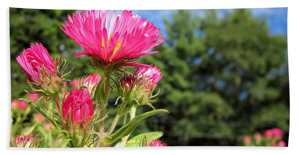 Asters Beach Towel featuring the photograph Asters by MTBobbins Photography