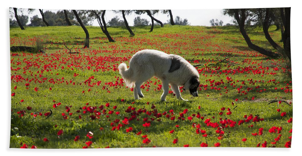 Blossom Beach Towel featuring the photograph At Ruchama Forest Israel 1 by Dubi Roman