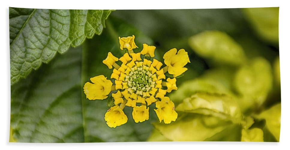 Atlanta Beach Towel featuring the photograph Atlanta Botanical Garden Flowers V9 by Douglas Barnard