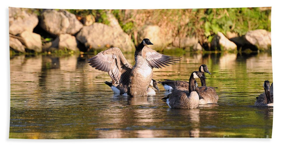 Canada Goose Beach Towel featuring the photograph Attention Please by Todd Hostetter