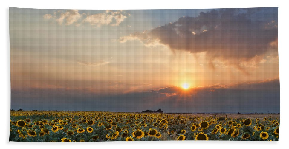 Flowers Beach Towel featuring the photograph August Dreams by Jim Garrison