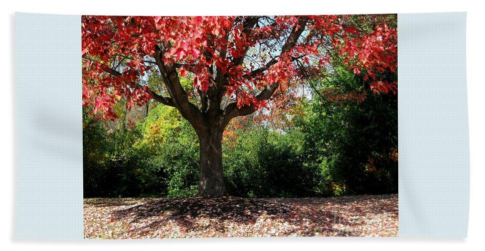 Autumn Beach Sheet featuring the photograph Autumn Ablaze by Ann Horn
