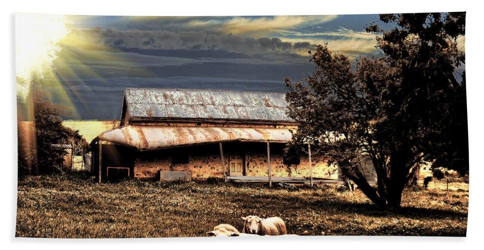 Sheep Beach Towel featuring the photograph Autumn Brown by Douglas Barnard