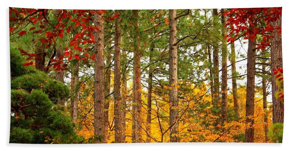 Autumn Beach Towel featuring the photograph Autumn Canvas by Carol Groenen