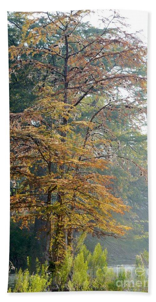 Autumn Beach Towel featuring the photograph Autumn Cypress by Gary Richards