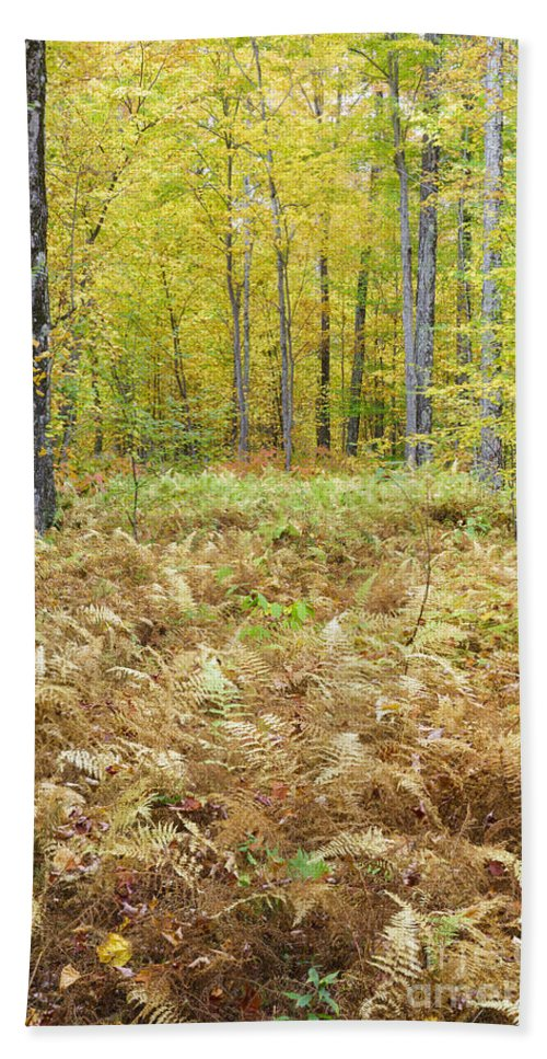 Autumn Beach Sheet featuring the photograph Autumn Forest - White Mountains New Hampshire by Erin Paul Donovan
