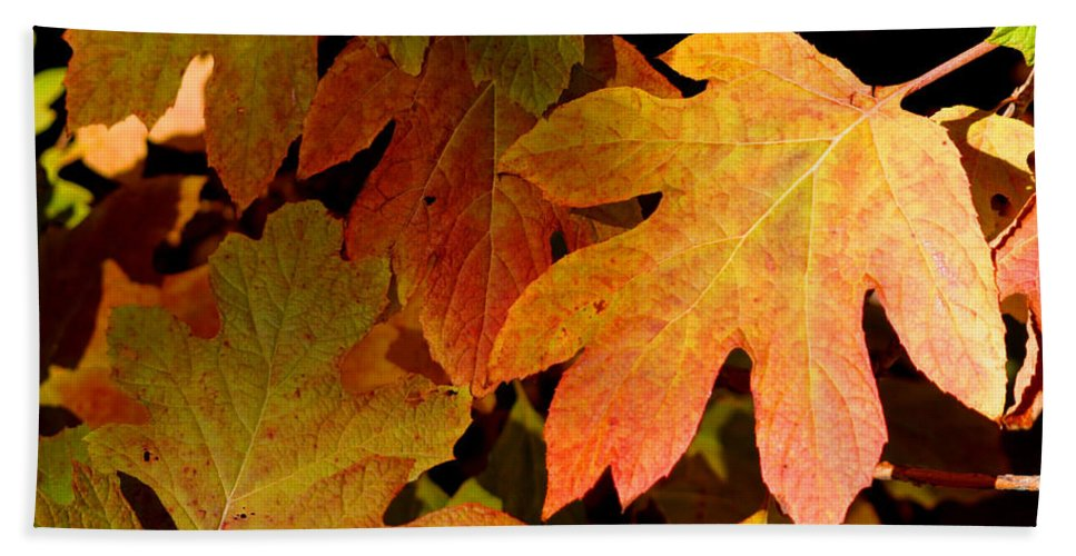 Autumn Beach Towel featuring the photograph Autumn Hues by Living Color Photography Lorraine Lynch