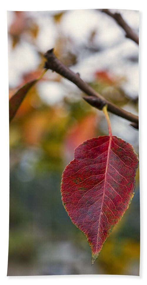Fall Beach Towel featuring the photograph Autumn Leaf by Paulo Goncalves