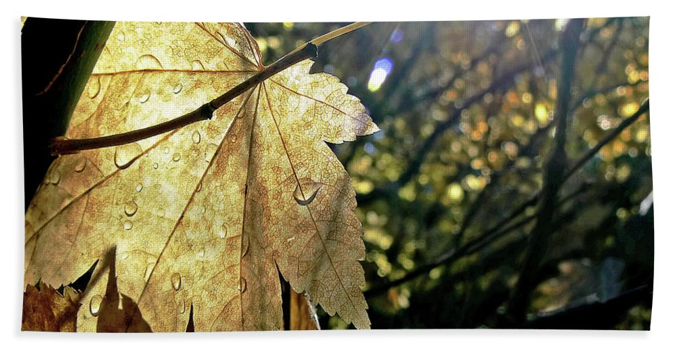 Leaf Beach Towel featuring the photograph Autumn Light On Leaf by Jennie Marie Schell