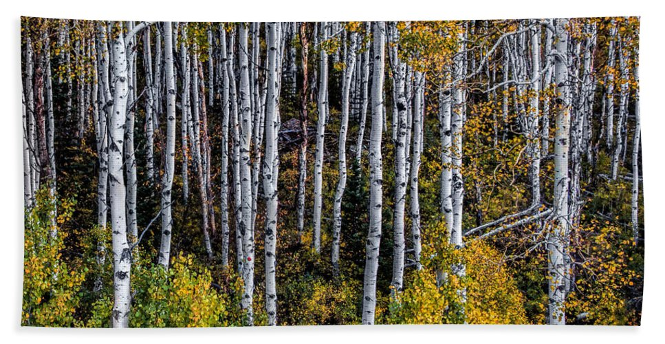 Colorado Beach Towel featuring the photograph Autumn On Mcclure Pass by Ken Smith