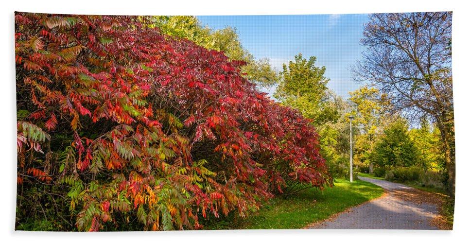 Steve Harrington Beach Towel featuring the photograph Autumn Path by Steve Harrington