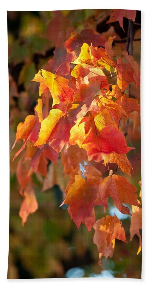 Autumn Beach Towel featuring the photograph Autumn by Sebastian Musial