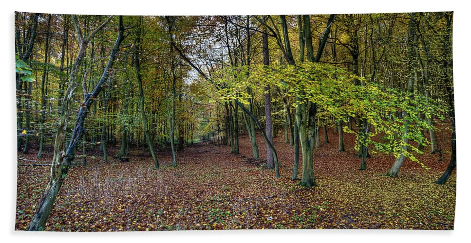 Autumn Beach Towel featuring the photograph Autumn Woodland by Gary Eason