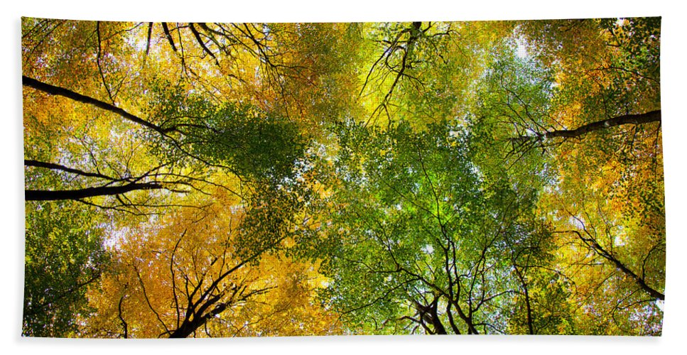 Autumn Beach Towel featuring the photograph Autumnal Display by Dave Bowman