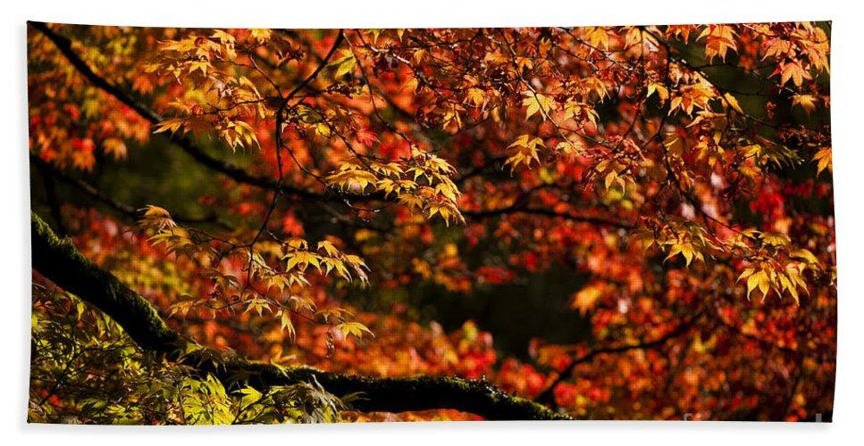Annegilbert Beach Sheet featuring the photograph Autumn's Glory by Anne Gilbert