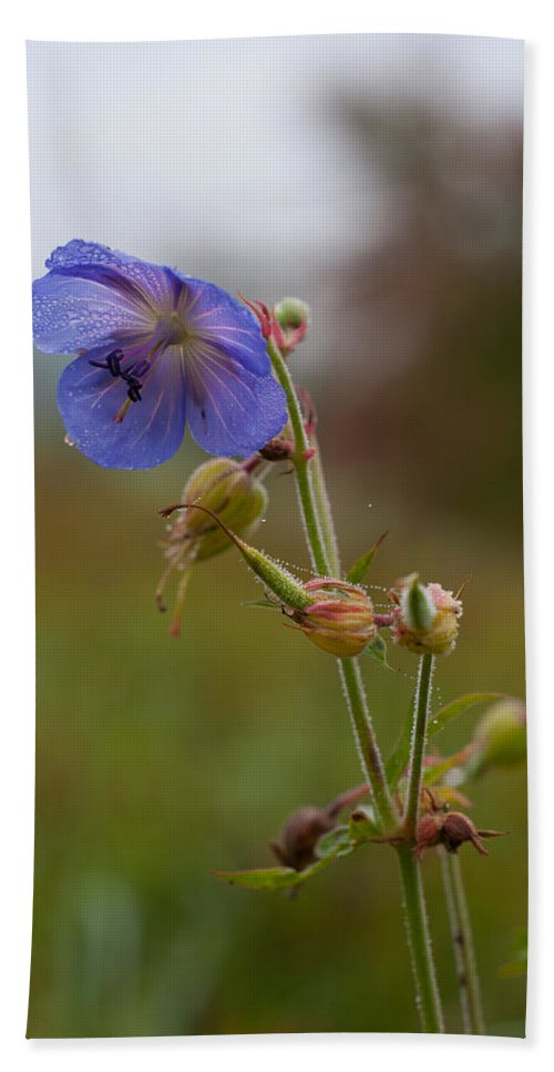 Fields Beach Towel featuring the photograph Autumns Misty Wildflowers by Miguel Winterpacht