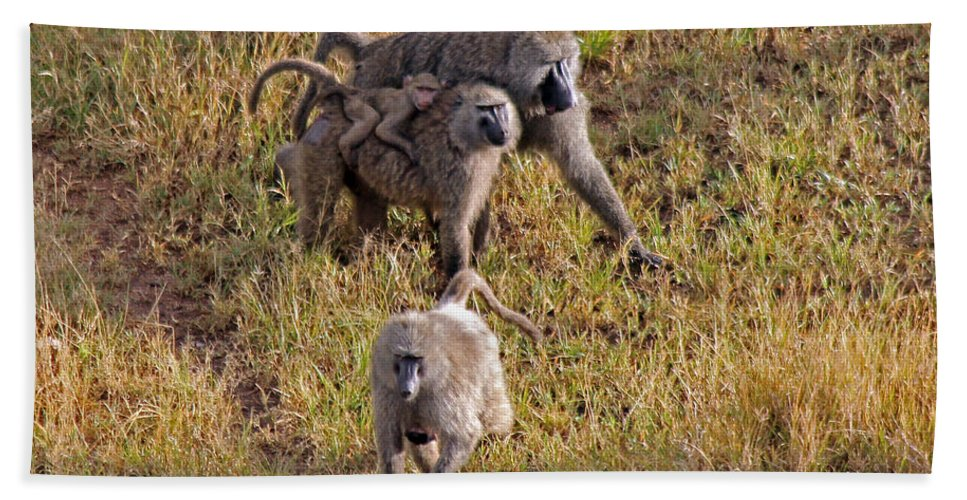 Baboons Beach Towel featuring the photograph Baboon Family by Tony Murtagh