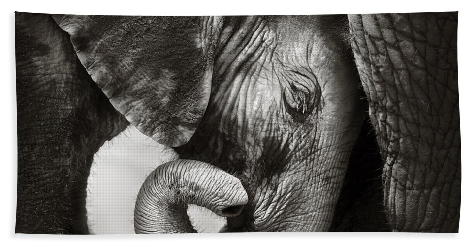 Elephant Beach Towel featuring the photograph Baby elephant seeking comfort by Johan Swanepoel