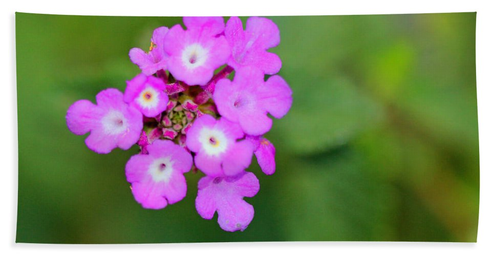 Simple Beach Towel featuring the photograph Flower - Baby In Pink by Kip Krause