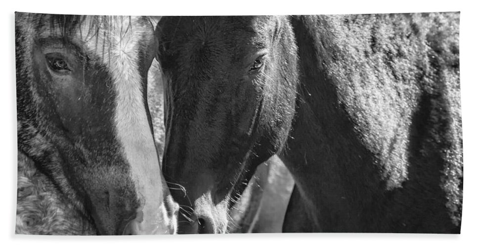 Pryor Mustangs Beach Towel featuring the photograph Bachelor Stallions - Pryor Mustangs - Bw by Belinda Greb