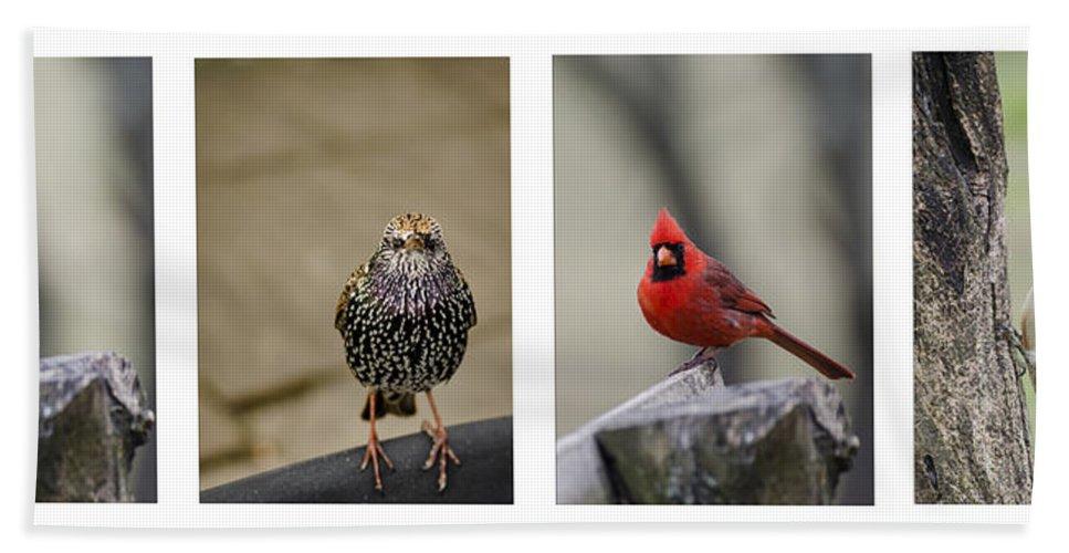 Bird Beach Towel featuring the photograph Backyard Bird Set by Heather Applegate