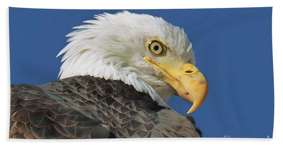 Eagle Beach Towel featuring the photograph Bald Eagle Closeup by Dianne Phelps