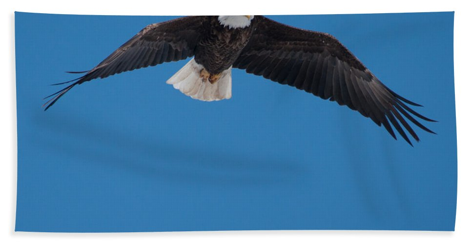 Bald Eagle Beach Towel featuring the photograph Bald Eagle In Flight 3 by Ronald Grogan