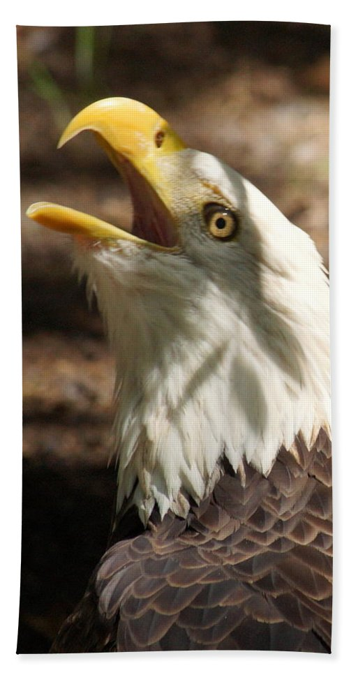 Eagle Beach Towel featuring the photograph Bald Eagle by Larry Allan