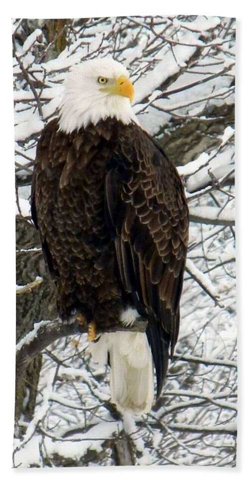Bald Eagle Beach Towel featuring the photograph Bald Eagle by Penny Meyers