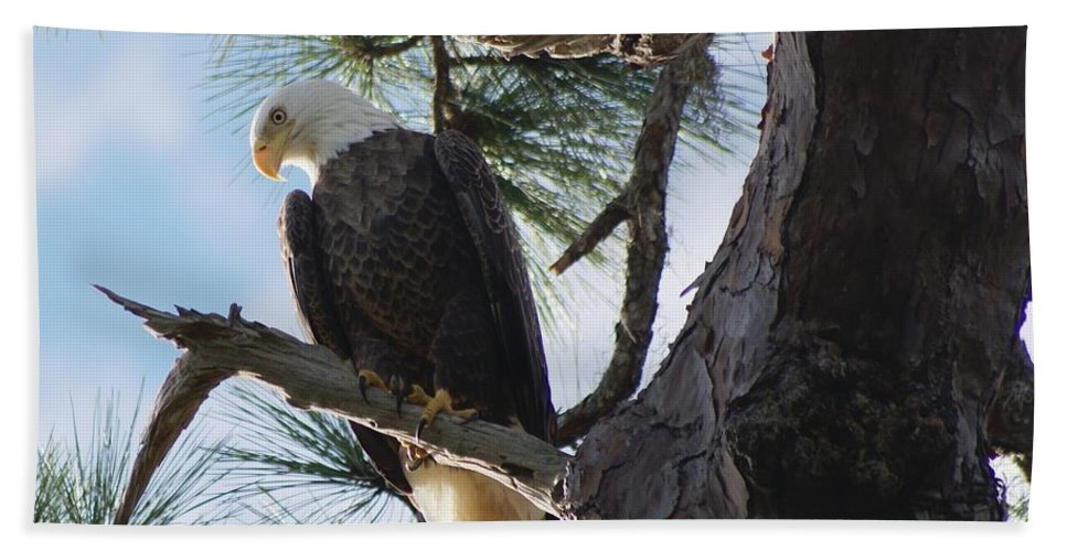 Bird Beach Towel featuring the photograph Bald Eagles Eye View by Patricia Twardzik