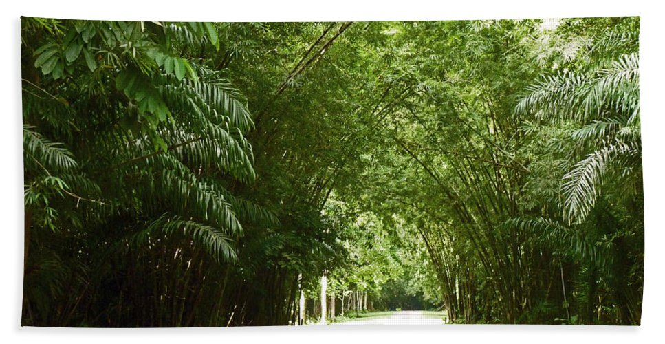 Bamboo Over Hanging The Road  Chagaramus Trinidad Beach Towel featuring the photograph Bamboo Cathedral by Karin Dawn Kelshall- Best