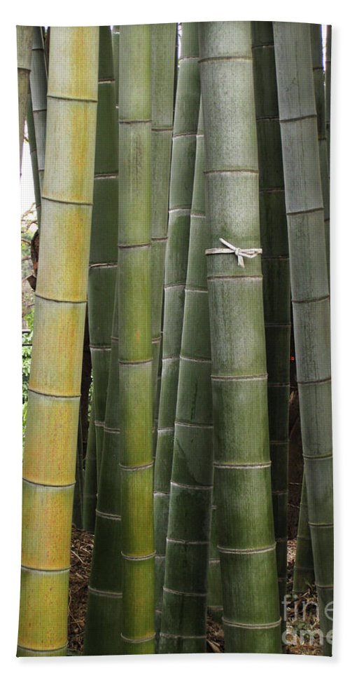 Bamboo Beach Towel featuring the photograph Bamboo by Eena Bo