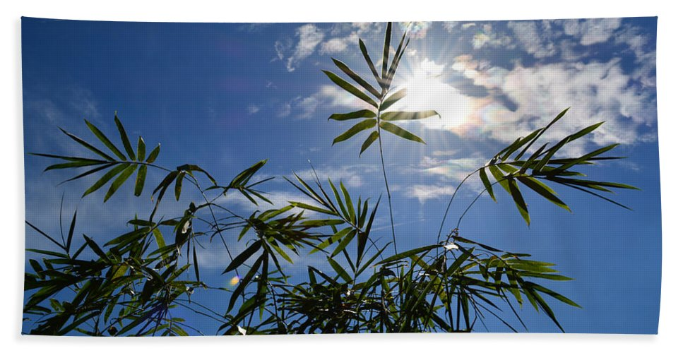 Bamboo Beach Towel featuring the photograph Bamboo Under The Sun by To-Tam Gerwe