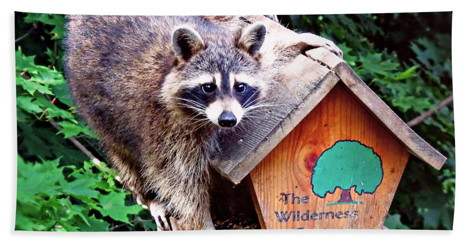 Racoon Beach Towel featuring the photograph Bandit by Elizabeth Winter