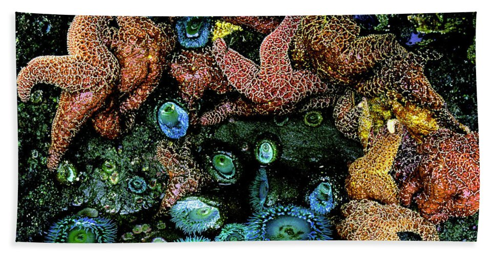 Ocean Tidal Pool Beach Towel featuring the photograph Bandon Beach Oregon Pacific Tidal Pool by Ed Riche