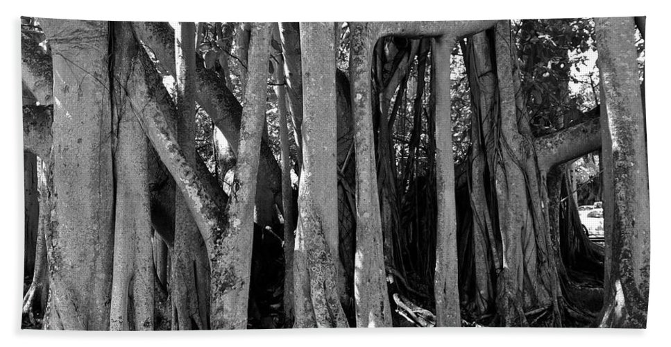 Black And White Beach Towel featuring the photograph Banyan Trees by Denise Mazzocco