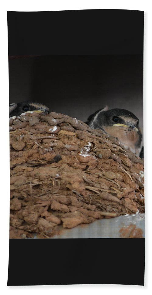 Barn Swallows Beach Towel featuring the photograph Barn Babies by Gale Cochran-Smith