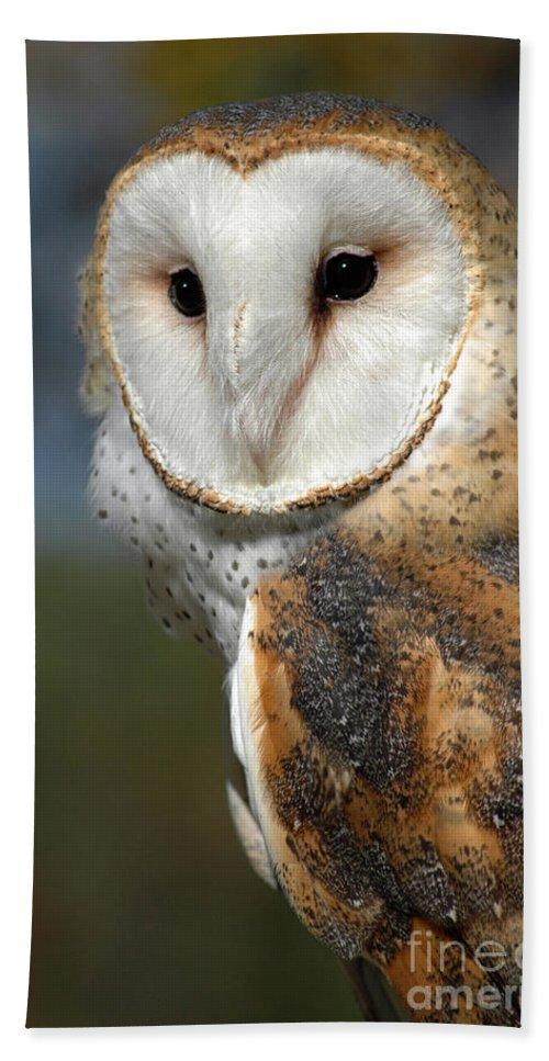 Barn Owl.owl Beach Towel featuring the photograph Barn Owl by Dave Mills