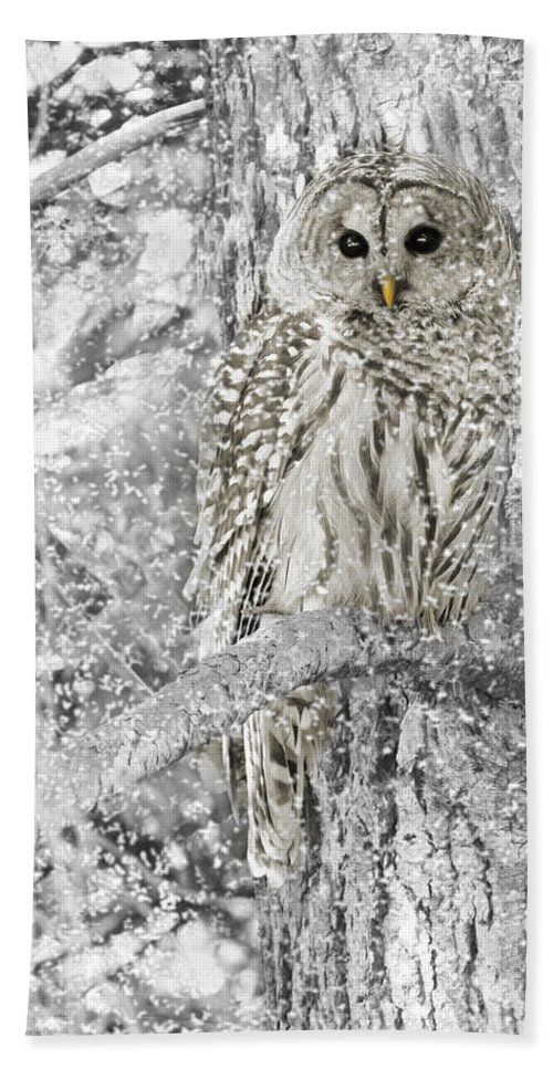 Owl Beach Towel featuring the photograph Barred Owl Snowy Day In The Forest by Jennie Marie Schell