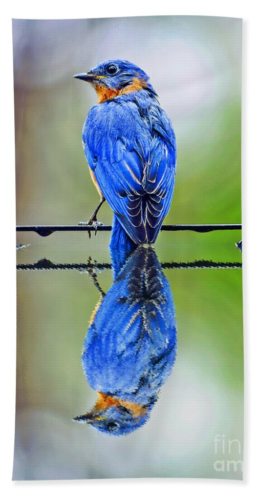 Reflection Beach Towel featuring the photograph Bath Time Reflection by Elvis Vaughn