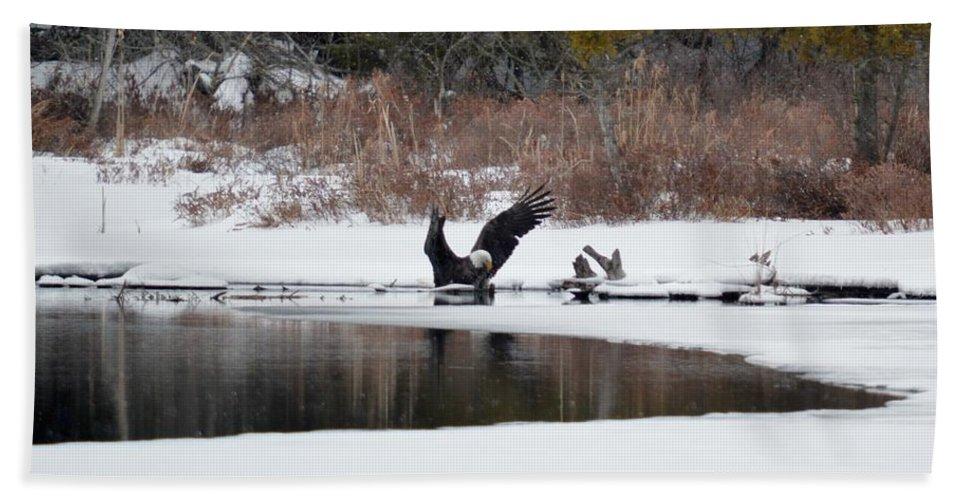 Bald Eagle Beach Towel featuring the photograph Bath Time by Thomas Phillips