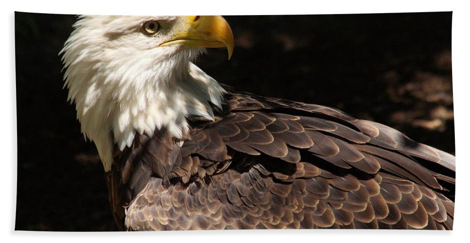 Eagle Beach Towel featuring the photograph Beautiful Bald Eagle by Larry Allan