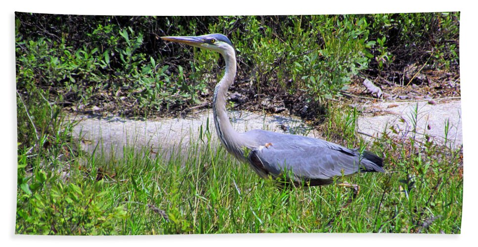 Blue Heron Beach Towel featuring the photograph Beautiful Blue Heron by Elizabeth Dow