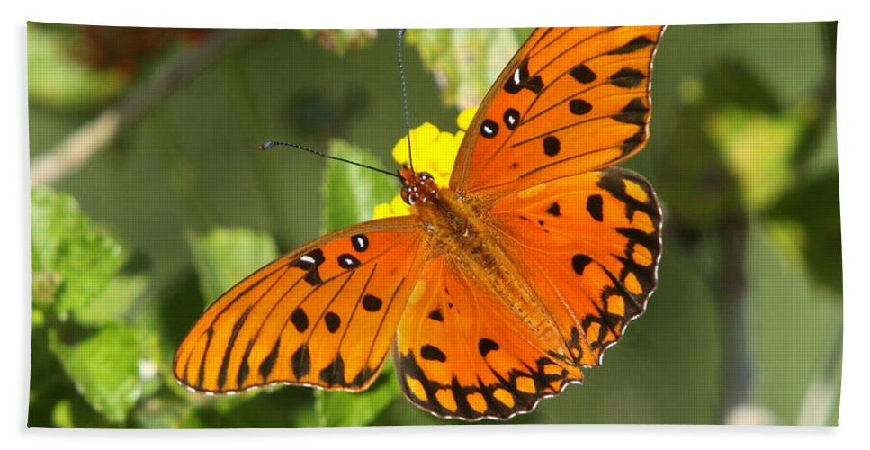 Butterfly Beach Towel featuring the photograph Beautiful Orange Butterfly - Gulf Fritillary by Christiane Schulze Art And Photography