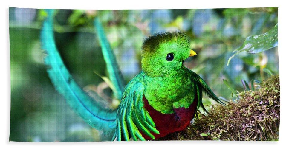 Bird Beach Towel featuring the photograph Beautiful Quetzal 5 by Heiko Koehrer-Wagner
