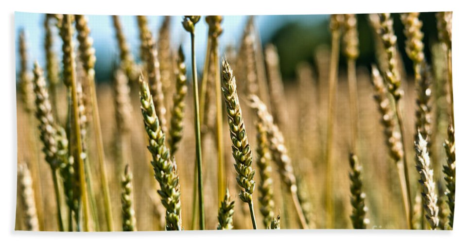 Wheat Beach Towel featuring the photograph Beautiful Wheat by Cheryl Baxter