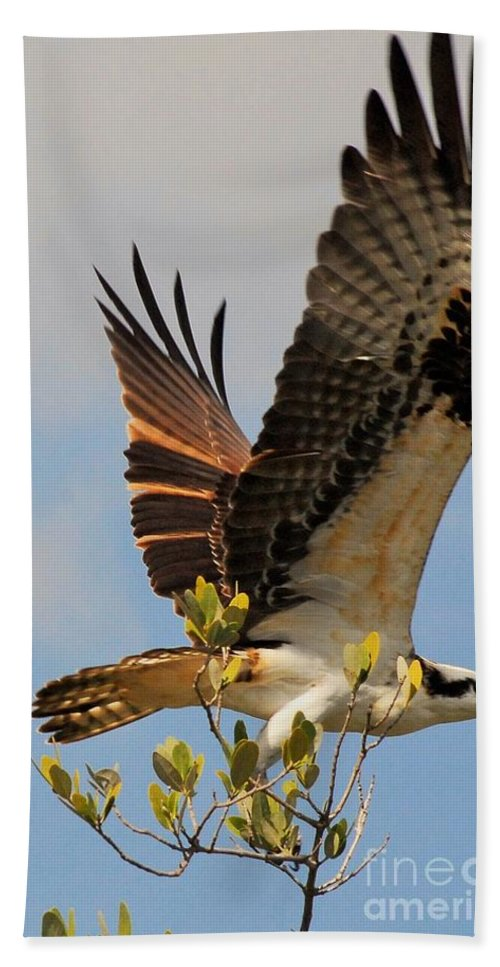 Osprey Beach Towel featuring the photograph Beautiful Wings by Quinn Sedam